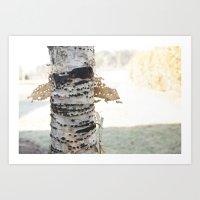 birch Art Prints featuring birch by Rae Snyder