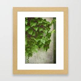 Winter Green Framed Art Print