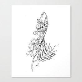 Vetch Canvas Print