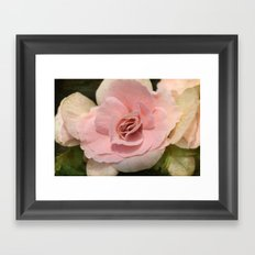 soft Begonia Framed Art Print