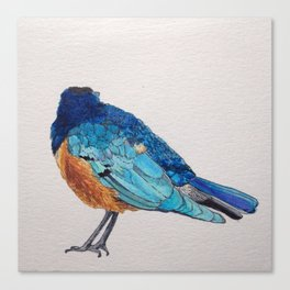 Birds: Starling Series | Superb Starling Canvas Print