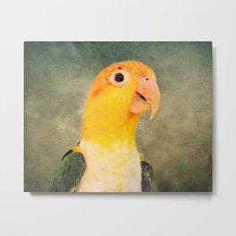 White Bellied Caique Parrot Metal Print