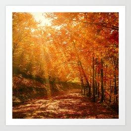 Autumn Photography - Sunlight Through The Leaves Art Print