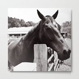 THE CALM BLACK HORSE Metal Print