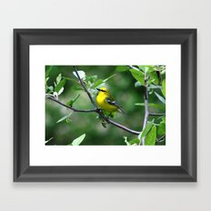 Blue-winged Warbler Framed Art Print