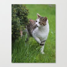 house cats Canvas Print