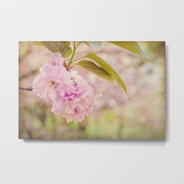Cherry blossom  in dream Metal Print