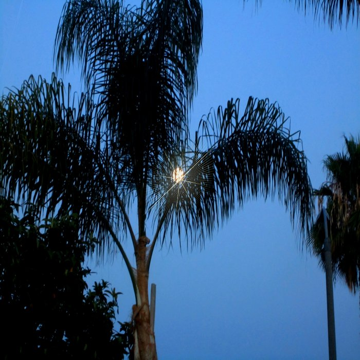 Moonlight through the Palms, Southern California Comforters