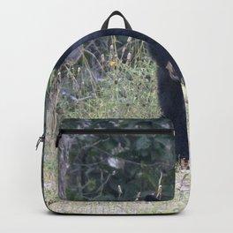 Watercolor Black Bear 15, Drake, Colorado Backpack