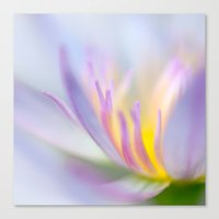 lotus Canvas Prints featuring Lotus by Eugenie