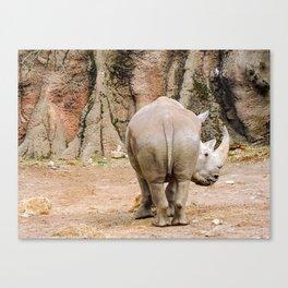 Rhino butt Canvas Print