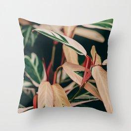 Stromanthe Triostar Throw Pillow