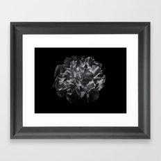 Backyard Flowers In Black And White 25 Framed Art Print