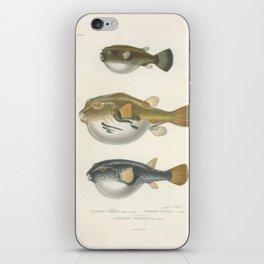 Naturalist Pufferfish iPhone Skin