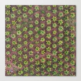 PALM VIBEZ Canvas Print