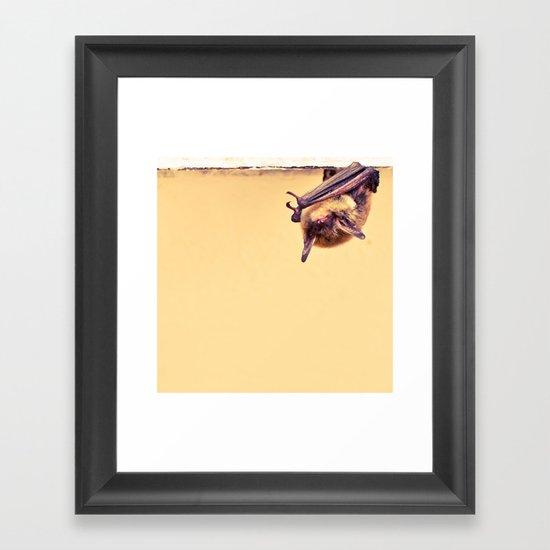 Shy Bat Framed Art Print