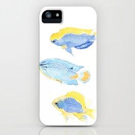 Genus Chrysiptera iPhone Case