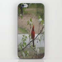 cardinal iPhone & iPod Skins featuring Cardinal  by Earth'sAnimalActivist23