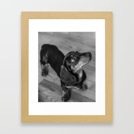 Weenie dog closeup (black and white) Framed Art Print