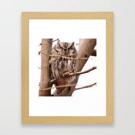Wild Owl - Ivins, Utah Framed Art Print