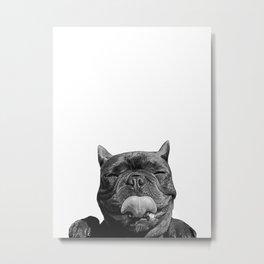 frenchie licking you Metal Print