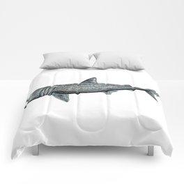Basking shark (Cetorhinus maximus) Comforters