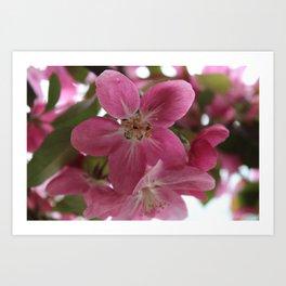 CrabApple Flowers Art Print