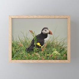 Puffin close-up Framed Mini Art Print