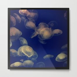 Jellies of the World Metal Print