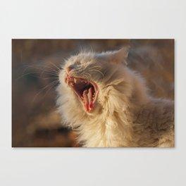 Sleepy cat II Canvas Print