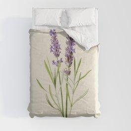 Lavender Antique Botanical Illustration Comforters