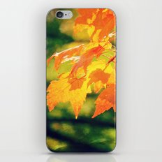 Lovely Yellow Leaves iPhone & iPod Skin