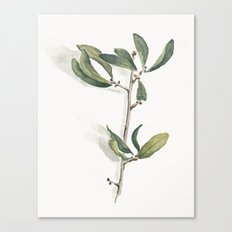 Olive Branch Watercolor Canvas Print
