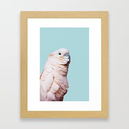 Parrot Photography | Pink Bird |  Tropical | Exotic | Turquoise Art | Blush Pink Framed Art Print