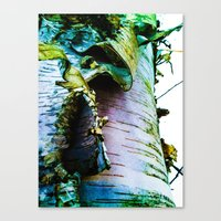 birch Canvas Prints featuring birch by Jeni Decker