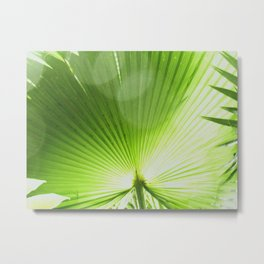 Sunlit Fan Palm Metal Print