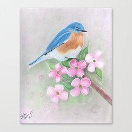 blue bird and dogwood Canvas Print