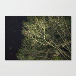 En-tree-ging Canvas Print
