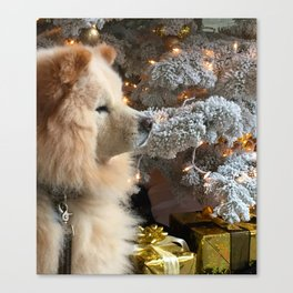 fluffy chow chow puppy in front of christmas tree Canvas Print