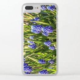 Grape hyacinths muscari Clear iPhone Case