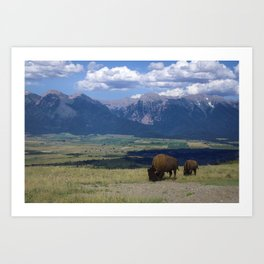 Vast Frontier, Mountains and Bison Art Print