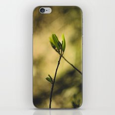 Spring at Nesmith Point iPhone & iPod Skin
