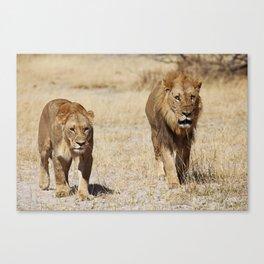 Duo Infernale, Africa wildlife Canvas Print