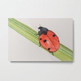 Ladybird on a blade of grass Metal Print