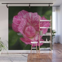 The One and Only, Beloved Wild Rose Wall Mural