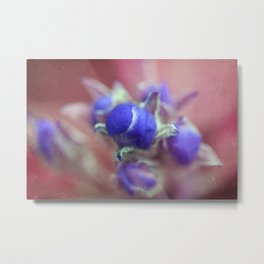 Apple buds  Metal Print