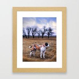 Saint Bernard Dreams Framed Art Print