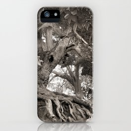1000 years old chestnut tree iPhone Case