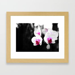 Orchid 02 Framed Art Print