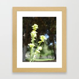 Mustards Framed Art Print